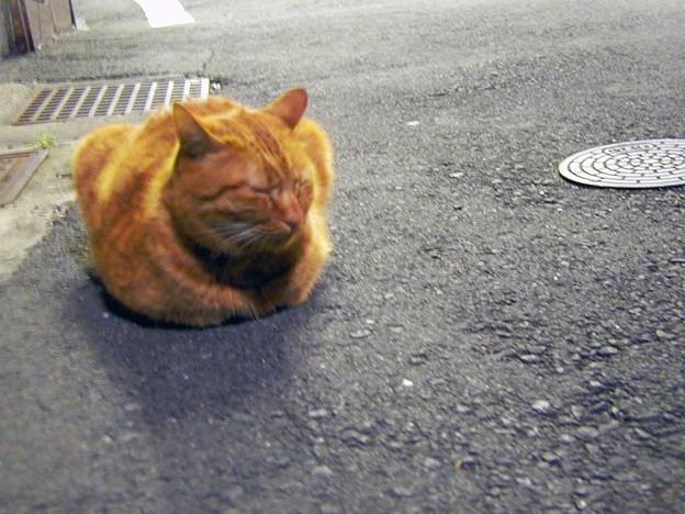 千駄木の猫 #1
