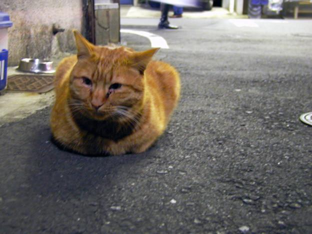 千駄木の猫 #2