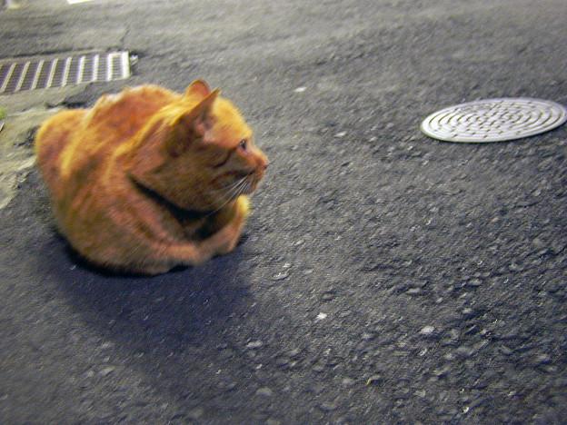 千駄木の猫 #3
