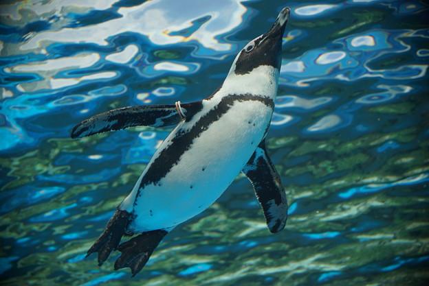 サンシャイン水族館 #3