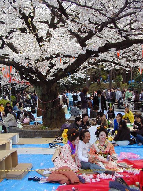 上野公園 桜#3