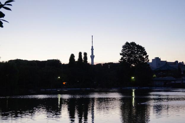 日の出前の不忍池