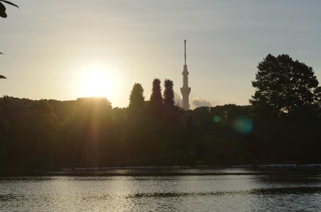 不忍池からの日の出