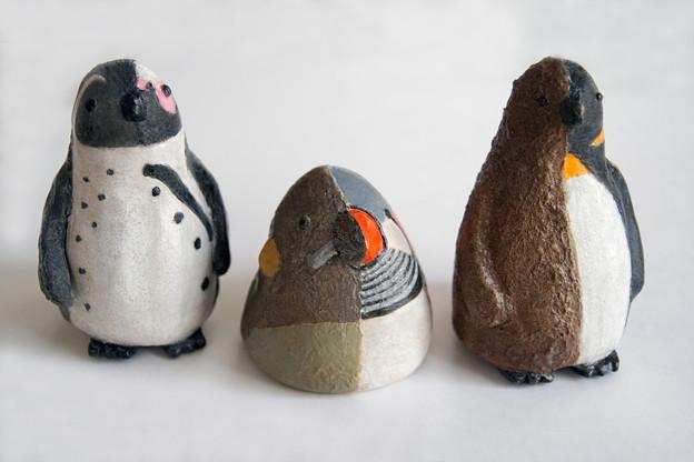 半幼ペンギン&半幼キンカチョウ