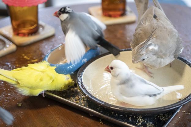 はなぶさ堂 小鳥茶会