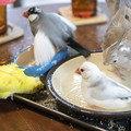Photos: はなぶさ堂 小鳥茶会 #10