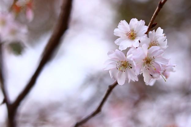 Photos: 柔