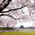 Photos: 雨の日のお花見