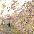 Photos: カメラ女子の花見