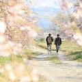 Photos: 見たことのない桜