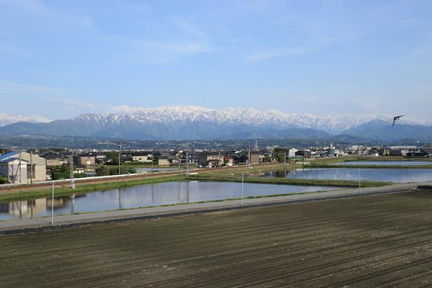 Photos: 春~水鏡~