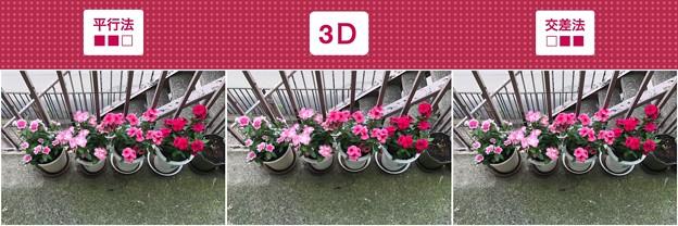 [3D]ニチニチソウ試作