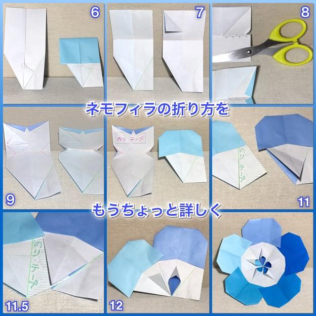 ネモフィラの折り方2