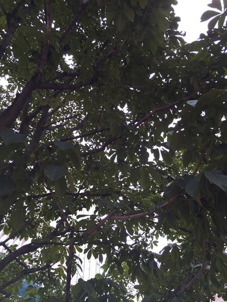 都内某所の樹木2015・3