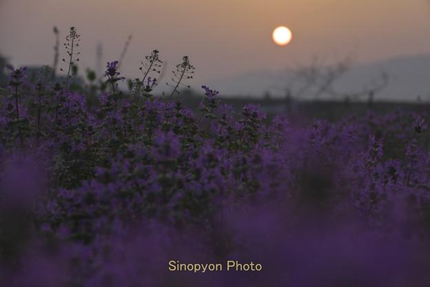 写真: 四国での日の出