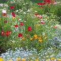写真: 秘密の花園