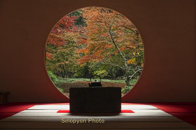 まさしく、鎌倉の秋