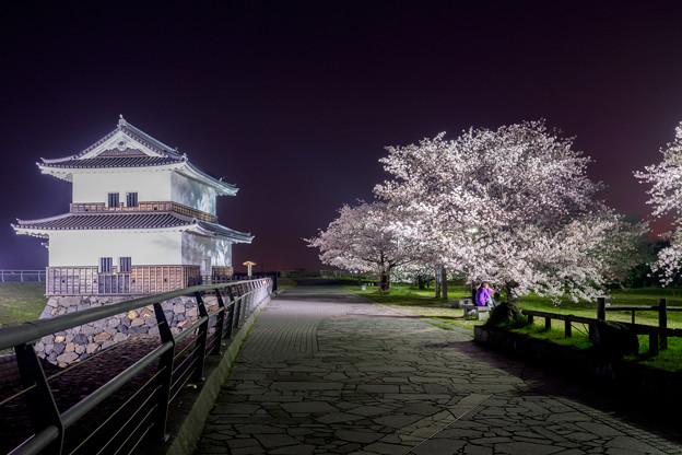 写真: 夜桜見物