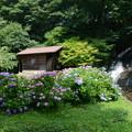 写真: お滝さんと紫陽花