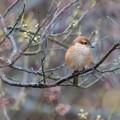 写真: 野鳥