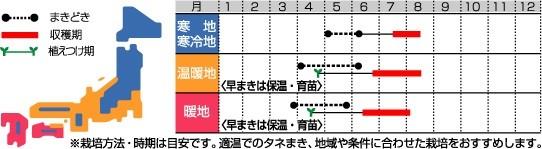 Photos: おつな姫(サカタのタネ)