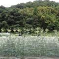 葉山農園風景(縮小)