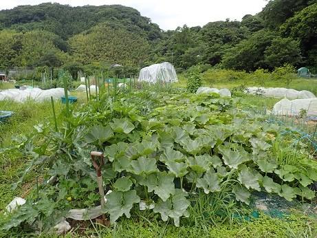 葉山農園6(縮小)