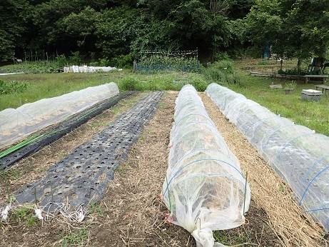 葉山農園8(縮小)