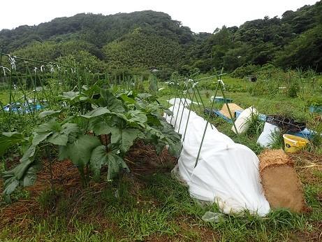 葉山農園5(縮小)