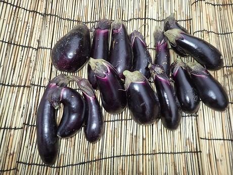 収穫野菜7(縮小)
