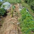 小さな菜園3(縮小)