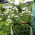 屋上菜園3(縮小)