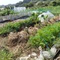菜園1(縮小)