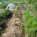 菜園3(縮小)