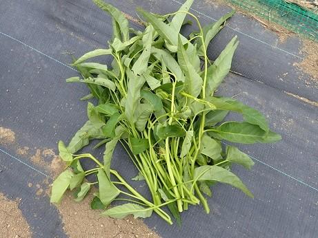 収穫野菜4(縮小)