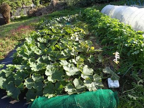 Photos: のほほん農園7(縮小)