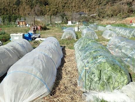 葉山農園4(縮小)