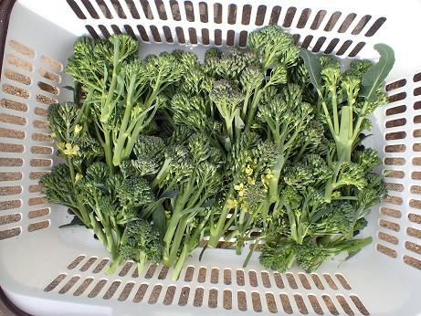 Photos: 収穫野菜3(縮小)