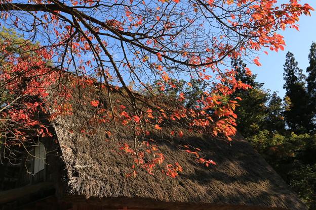 Photos: 紅葉と合掌造り