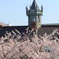 Photos: 県政記念館と桜