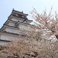 Photos: 鶴ヶ城と桜