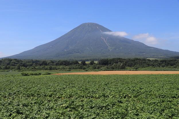 Photos: 羊蹄山