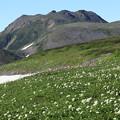 トムラウシとお花畑