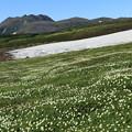 写真: 一面のお花畑