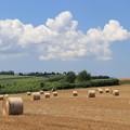 写真: 牧草ロール