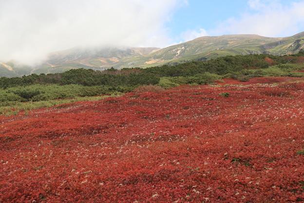 裾合平の紅葉