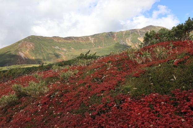 当麻岳と紅葉