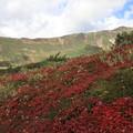 Photos: 当麻岳と紅葉