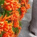 街路でよく咲きよく茂る
