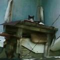 写真: 頭上遠くから視線を投げかけてきた猫